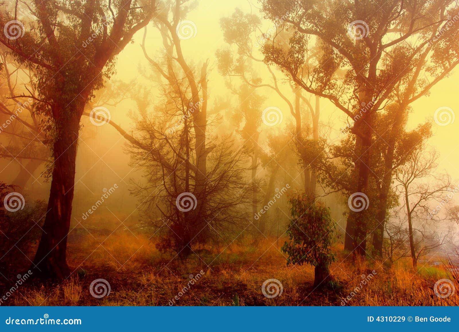 Salida del sol viva del bosque