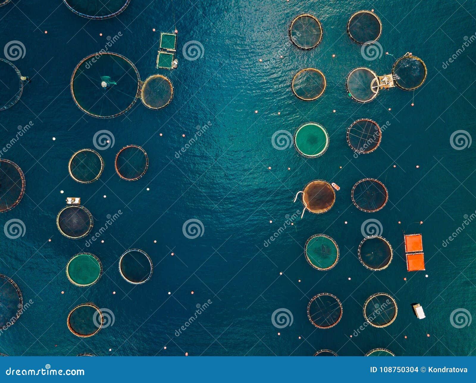 Salmon рыбоводческое хозяйство с плавая клетками вид с воздуха