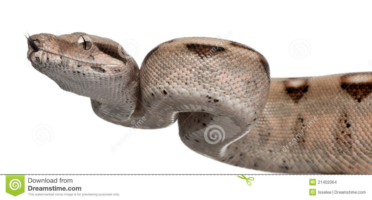 how to draw a boa constrictor