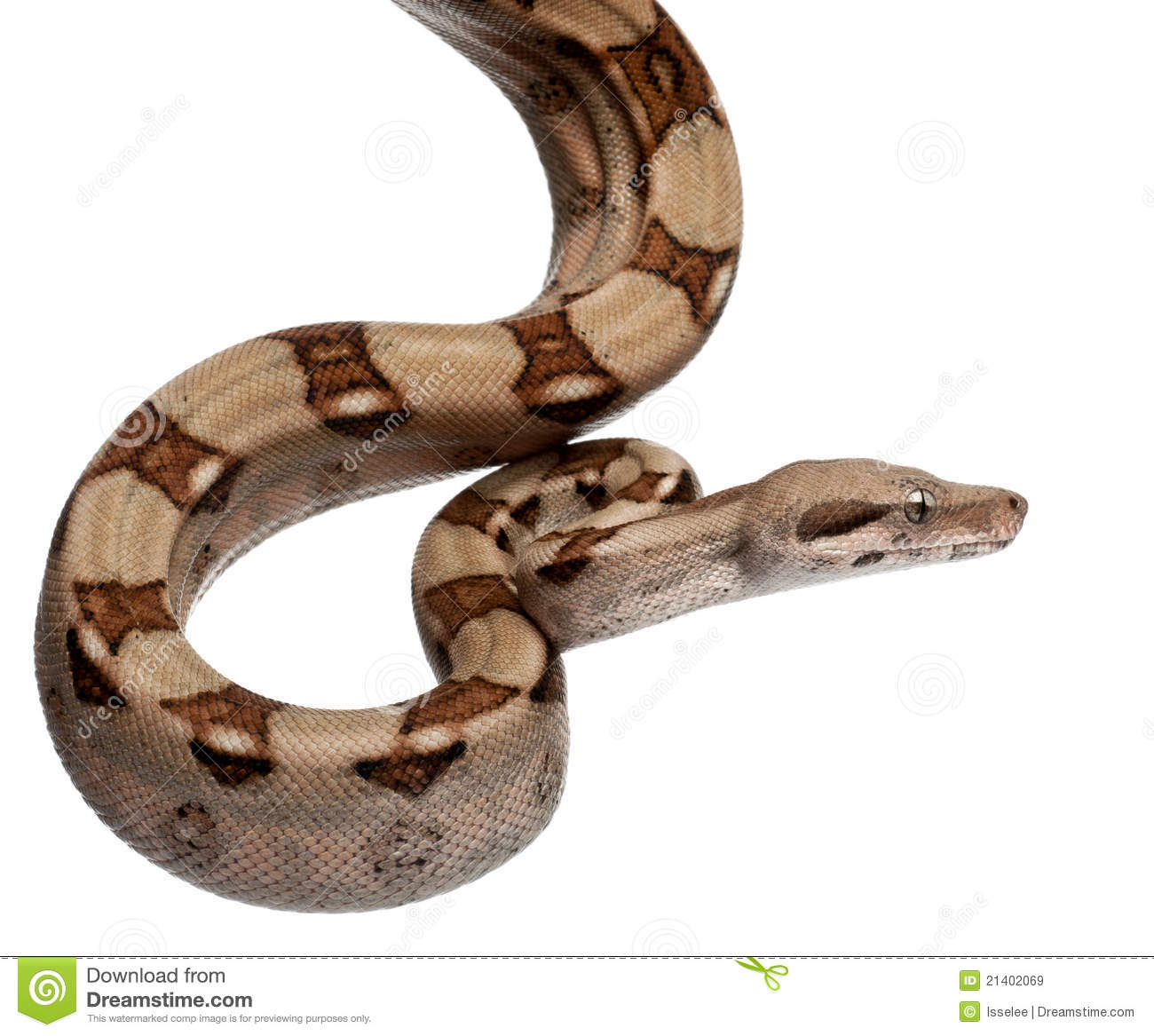 Royalty Free Stock Images Salmon Boa Constrictor Boa Constrictor Image21402069 besides Stock Photos Old Well Image11975793 in addition Detective Conan Psd Cartoon additionally Royalty Free Stock Photo Rhino Vector Illustration Image9891095 likewise Beautiful Blue Butterfly. on cartoon animal themes