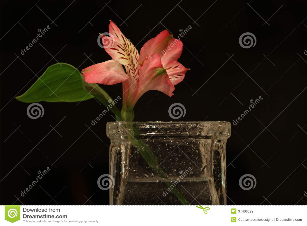 A salmon colored flower in a vase.