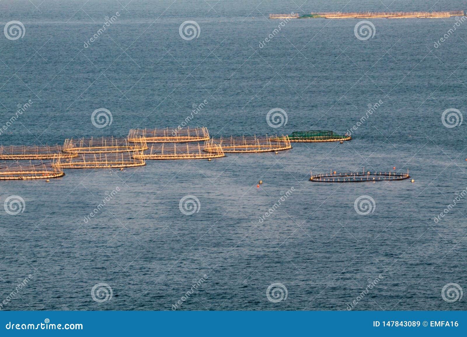 Salmon Farms in het Overzees, Ierland