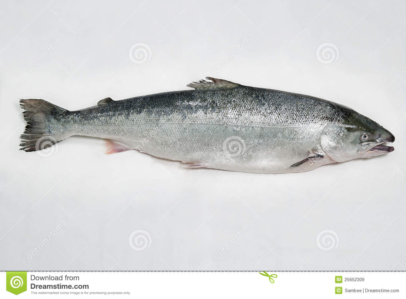 Salmon fish stock image image of food fresh cook for Salmon fish pictures