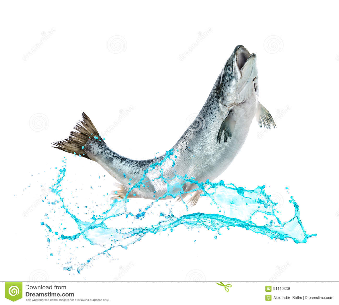 salmon fish jumping out of water stock image image of