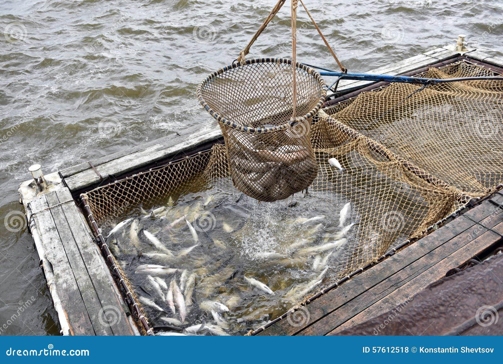 Salmon fishing season stock photo image 57612518 for Salmon fishing season
