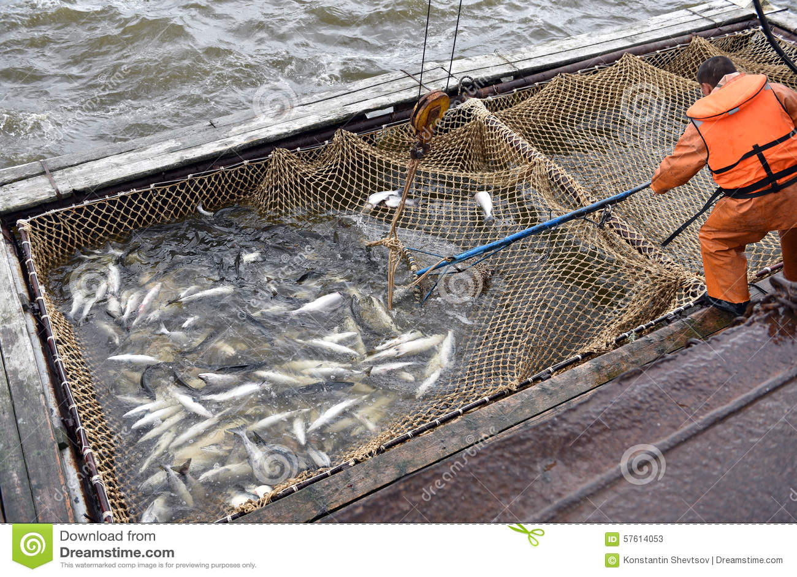 Salmon fishing season stock photo image 57614053 for Salmon fishing season
