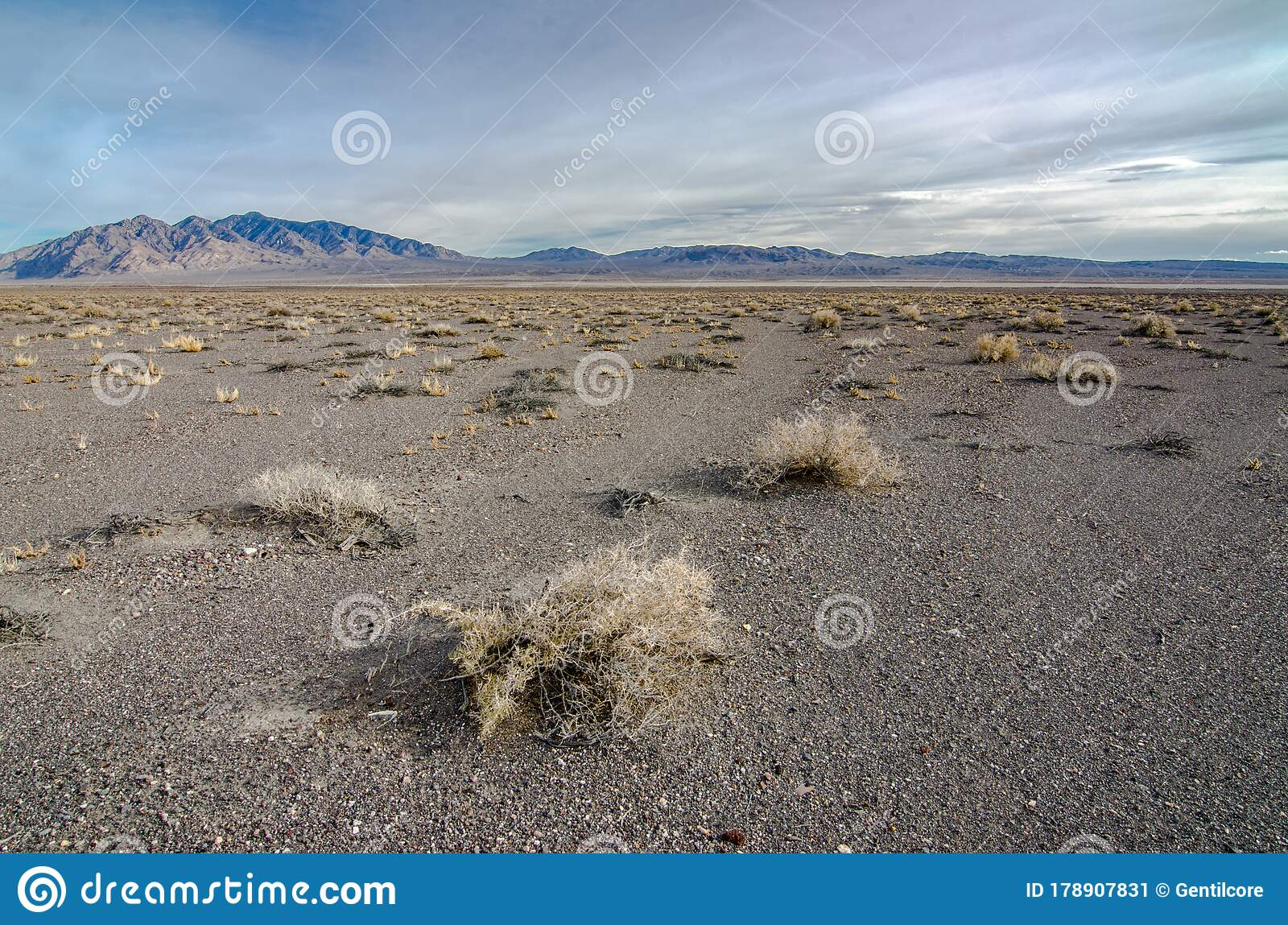 Salt Desert Scrub Stock Image Image Of Long Mojave 178907831