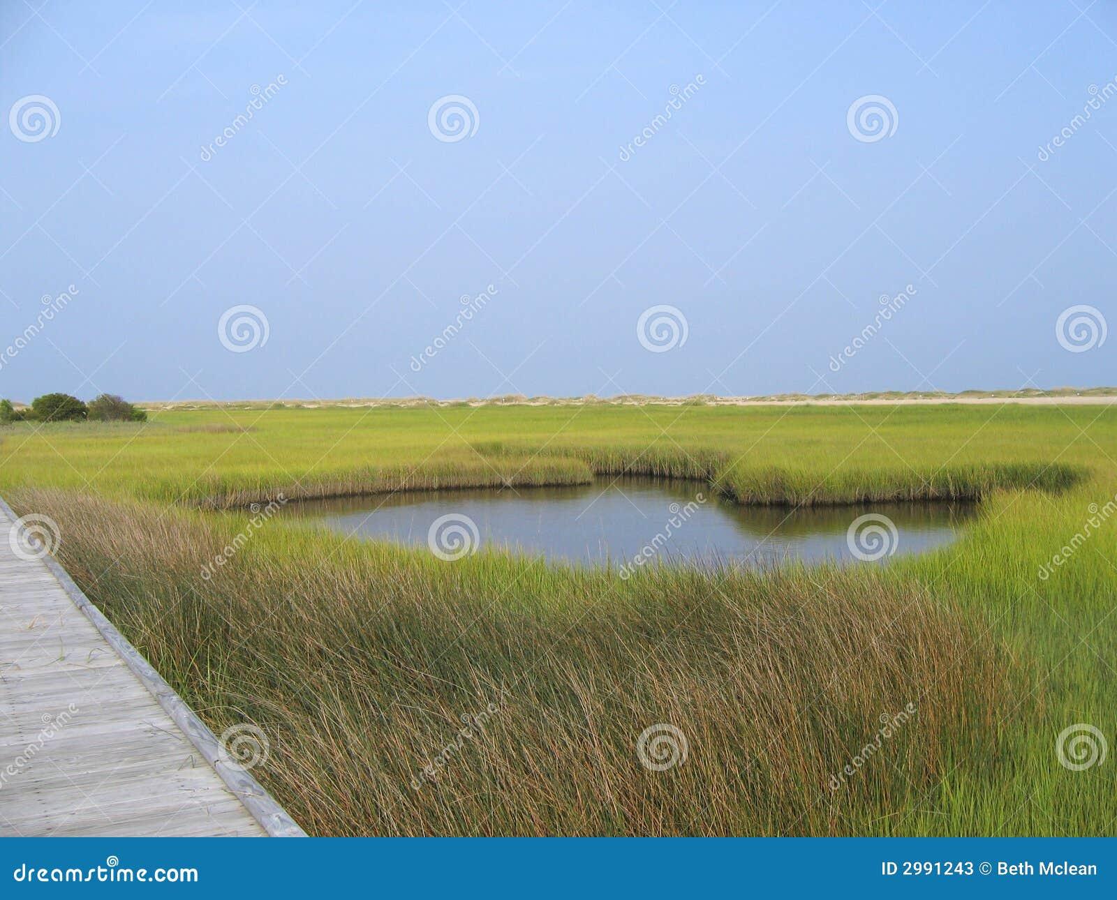 Salt marsh pond royalty free stock photo cartoondealer for Pond dealers