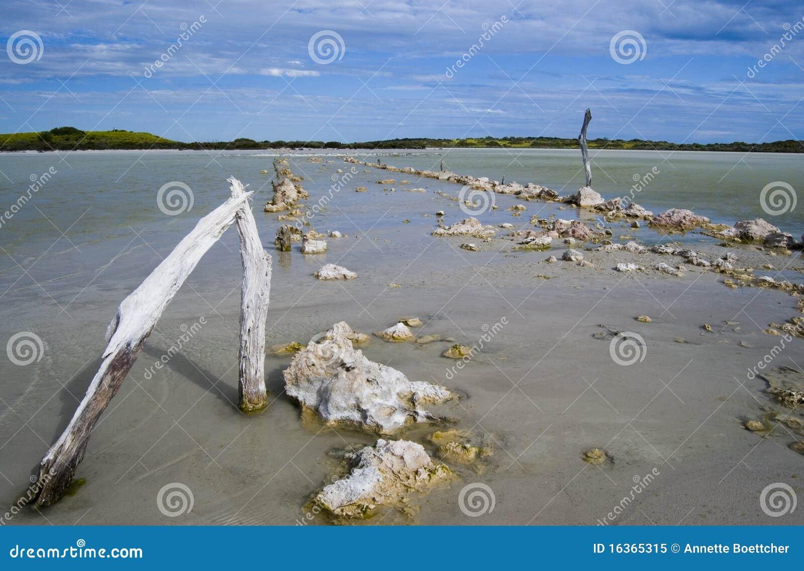 Salt Marshland