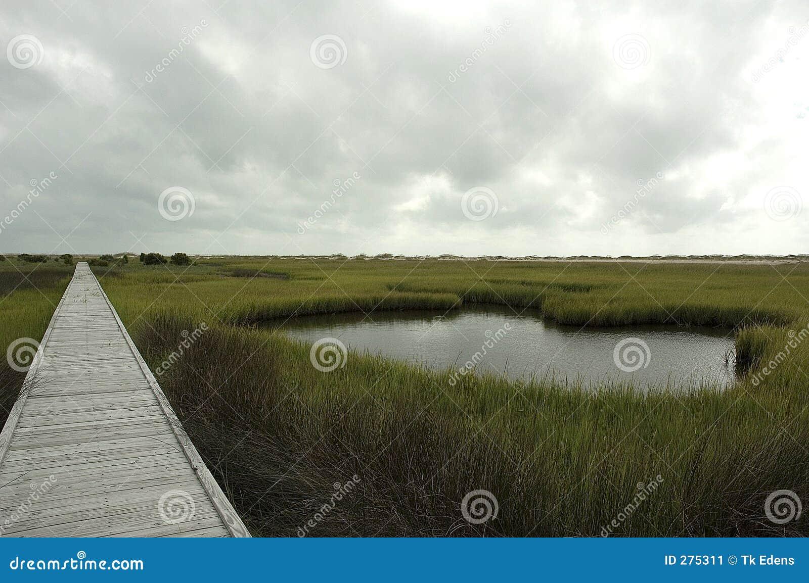Salt trail för marsh