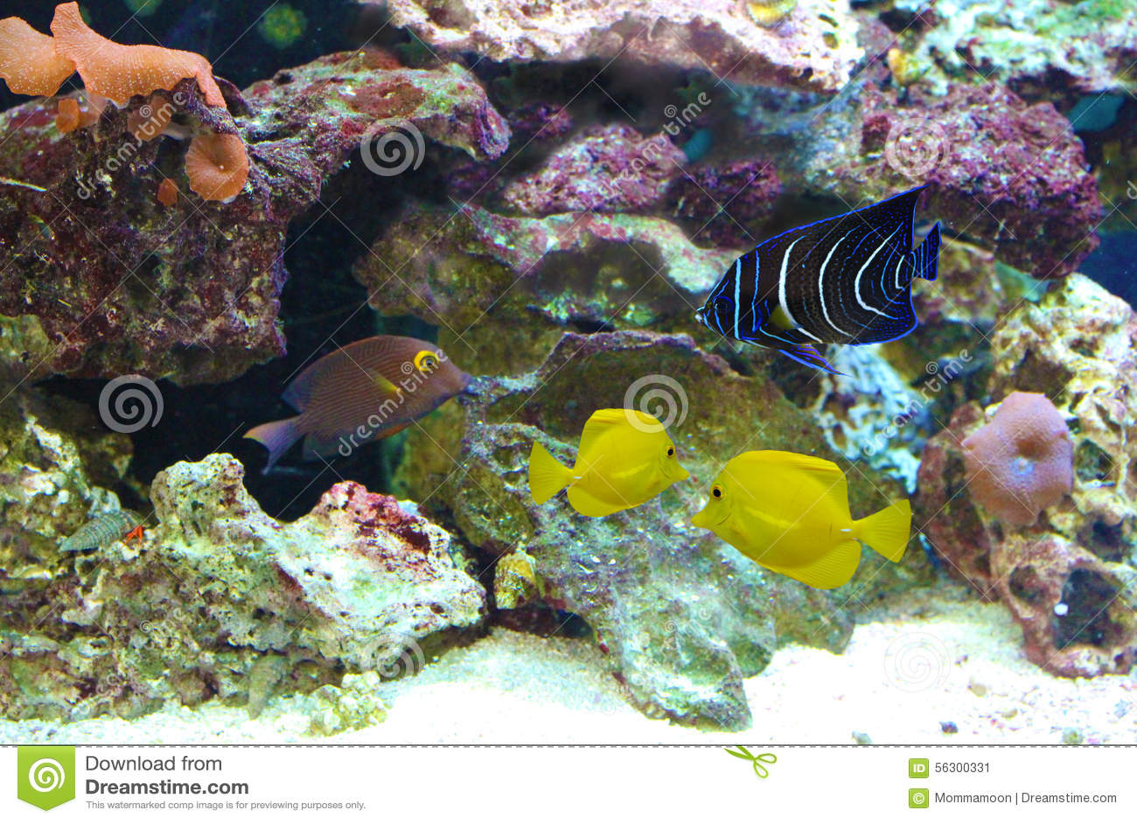 Marine fish tank yellow water the free information for Yellow fish tank water