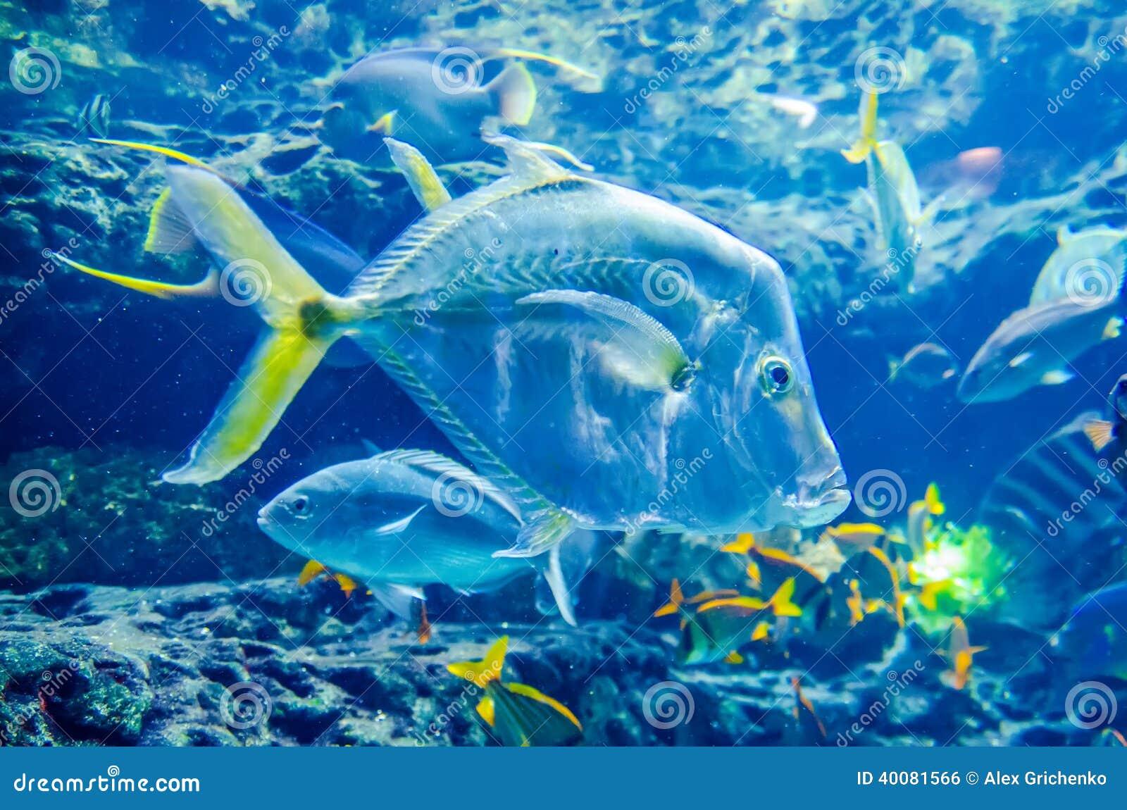 fish tank live wallpaper download