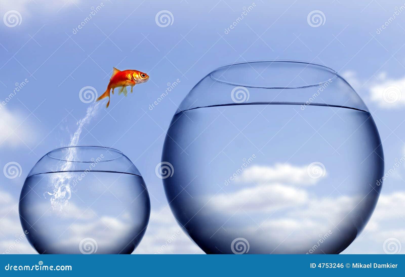 Saltar do Goldfish da água