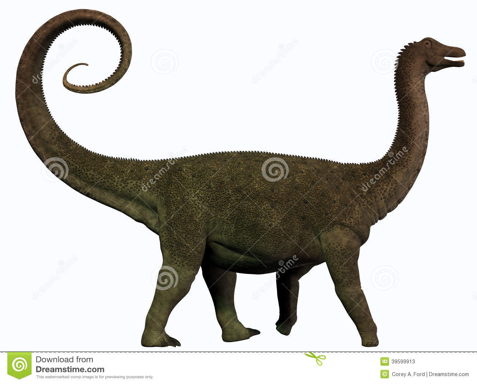 U S Lizard Saltasaurus Profile St...