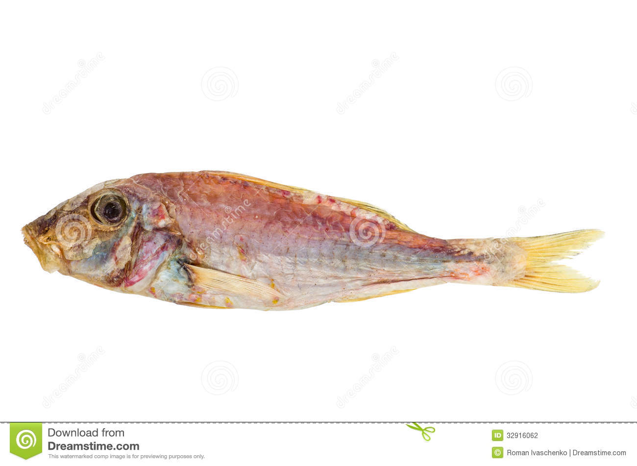 Salted and dried red mullet fish stock photo image 32916062 for Red mullet fish