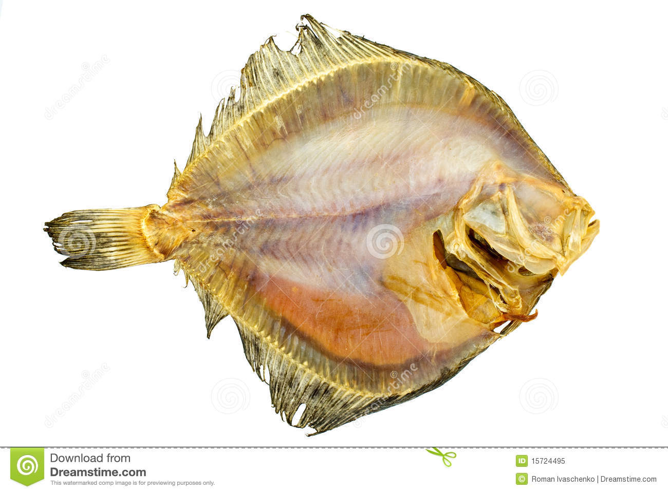 Salted turbot flatfish royalty free stock photo image for Turbot fish price