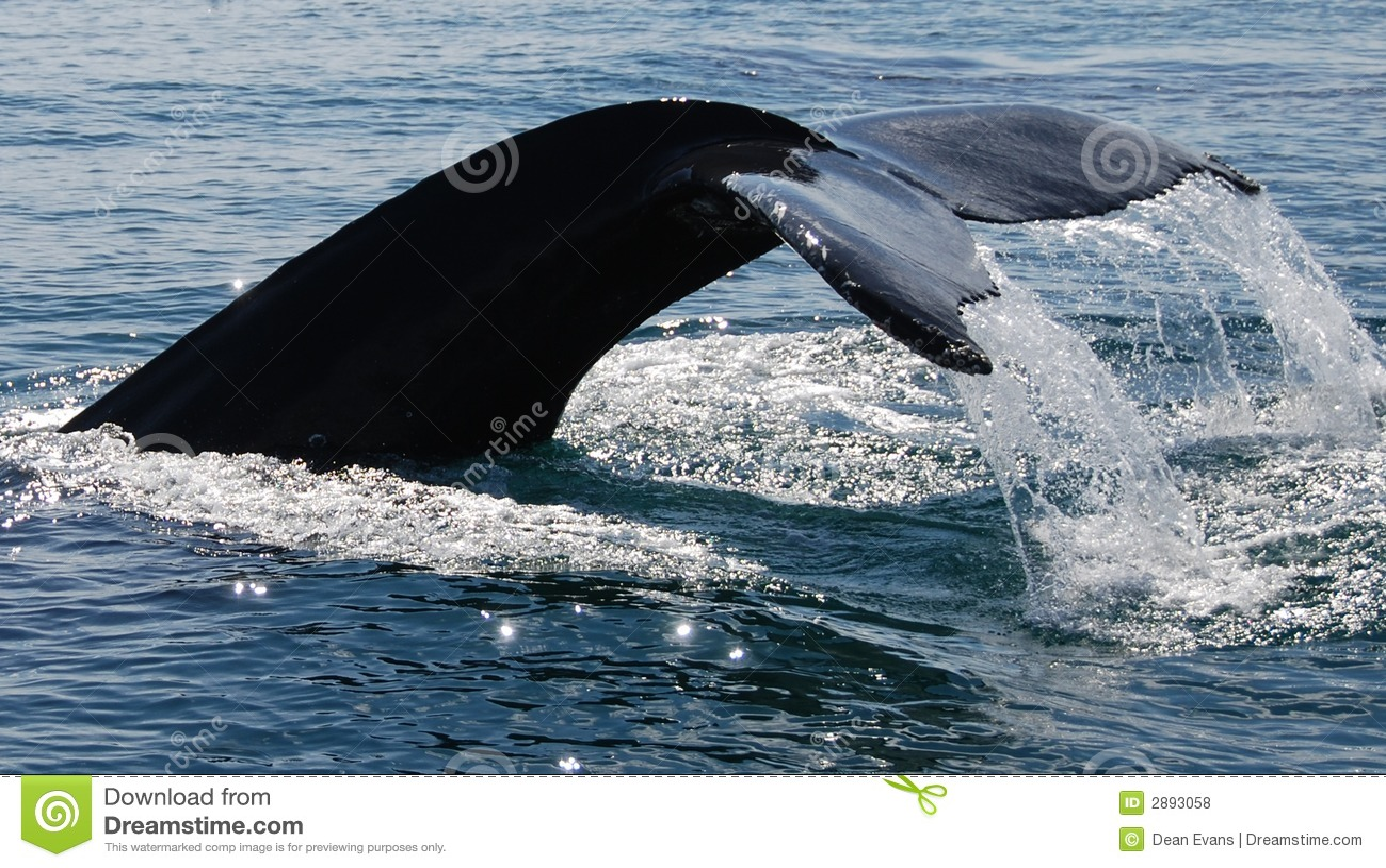Salto de la ballena de Humpback