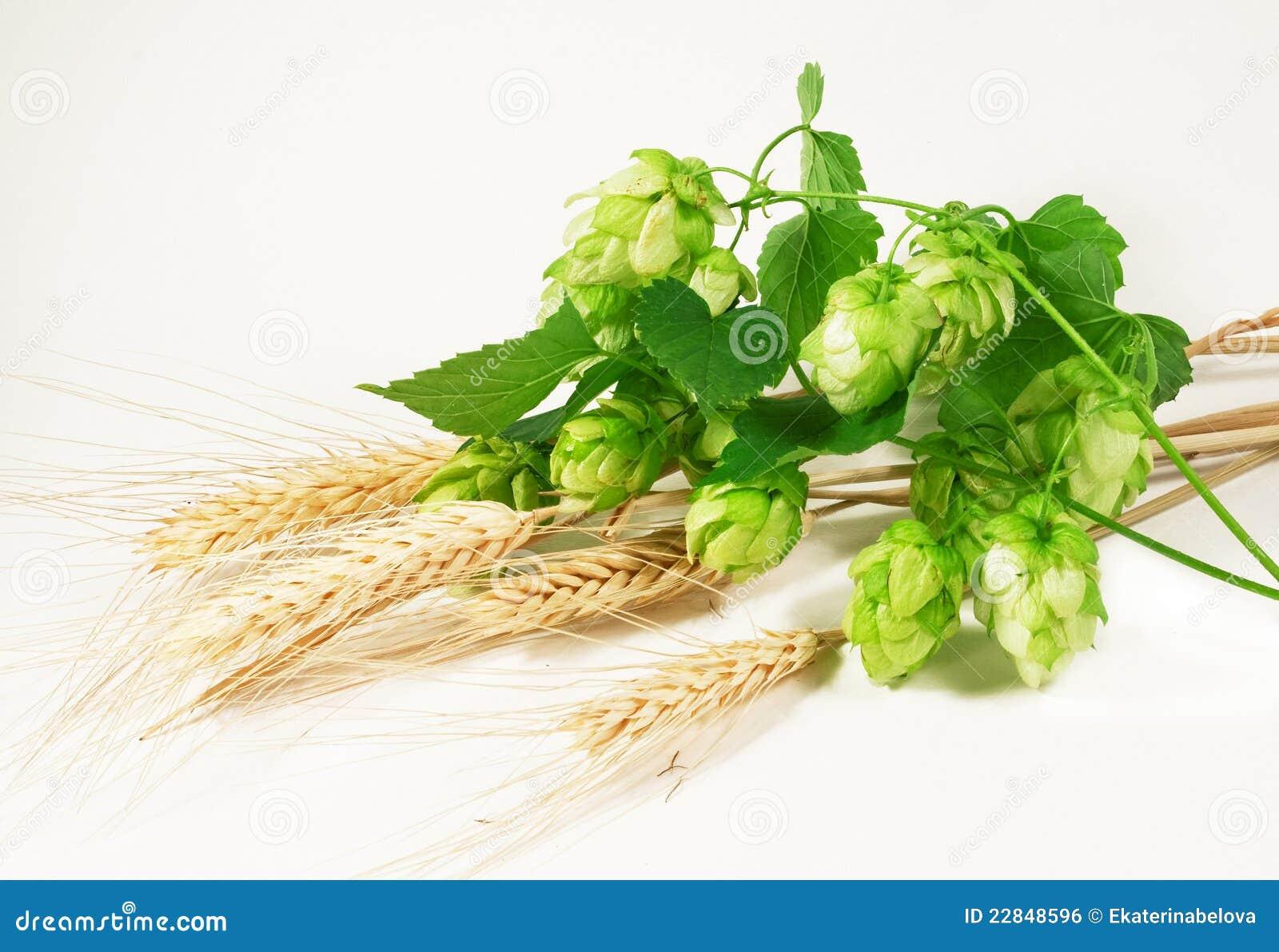 Salto y trigo
