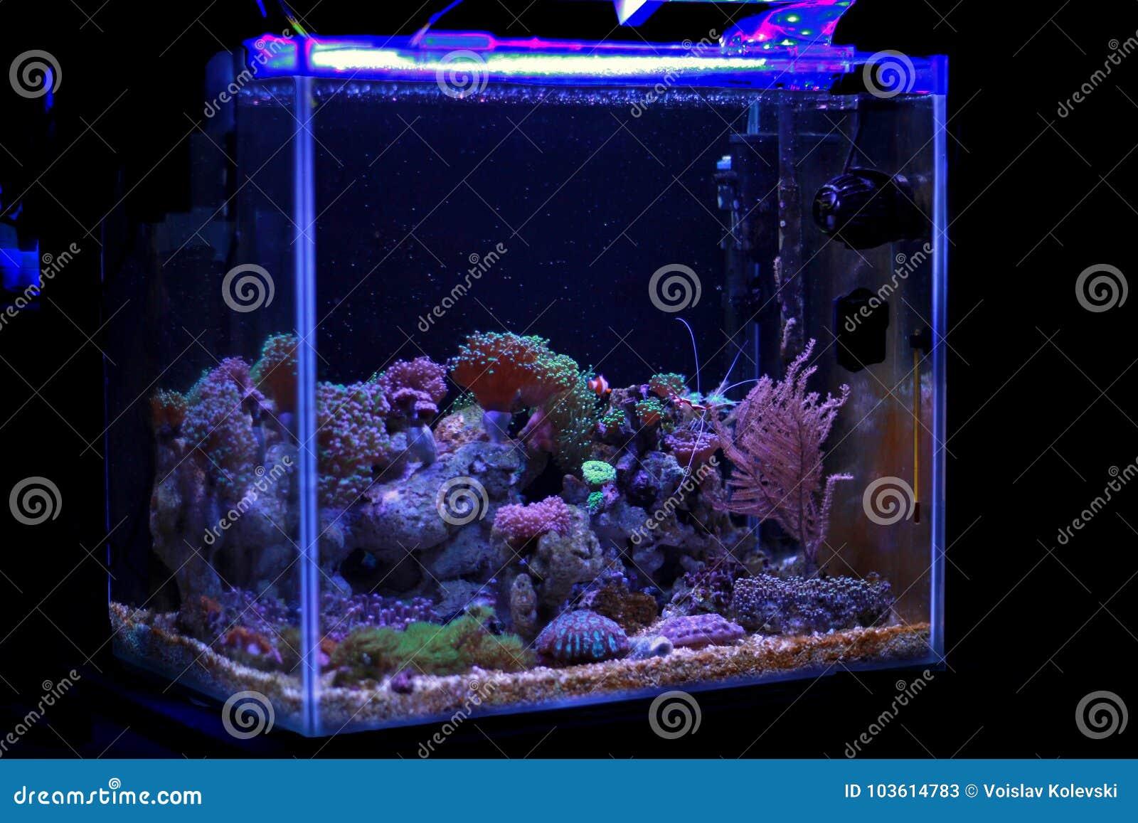 Saltvattens- akvarium, plats för behållare för korallrev hemma