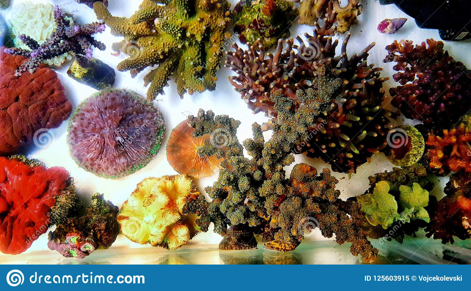 Saltwater Coral Reef Aquarium Fish Tank Is One Of The Most Beautiful