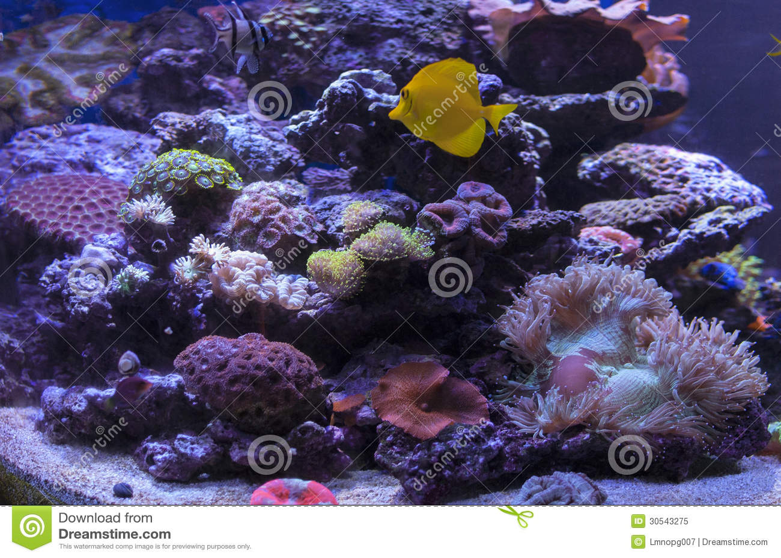 Saltwater Coral Reef Royalty Free Stock Photo Image