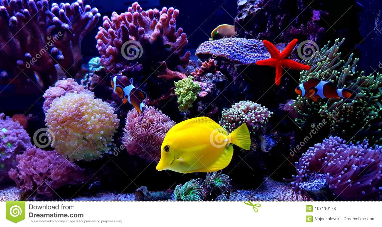 Coral Reef Aquarium Fish Tank Scene Stock Photo - Image of