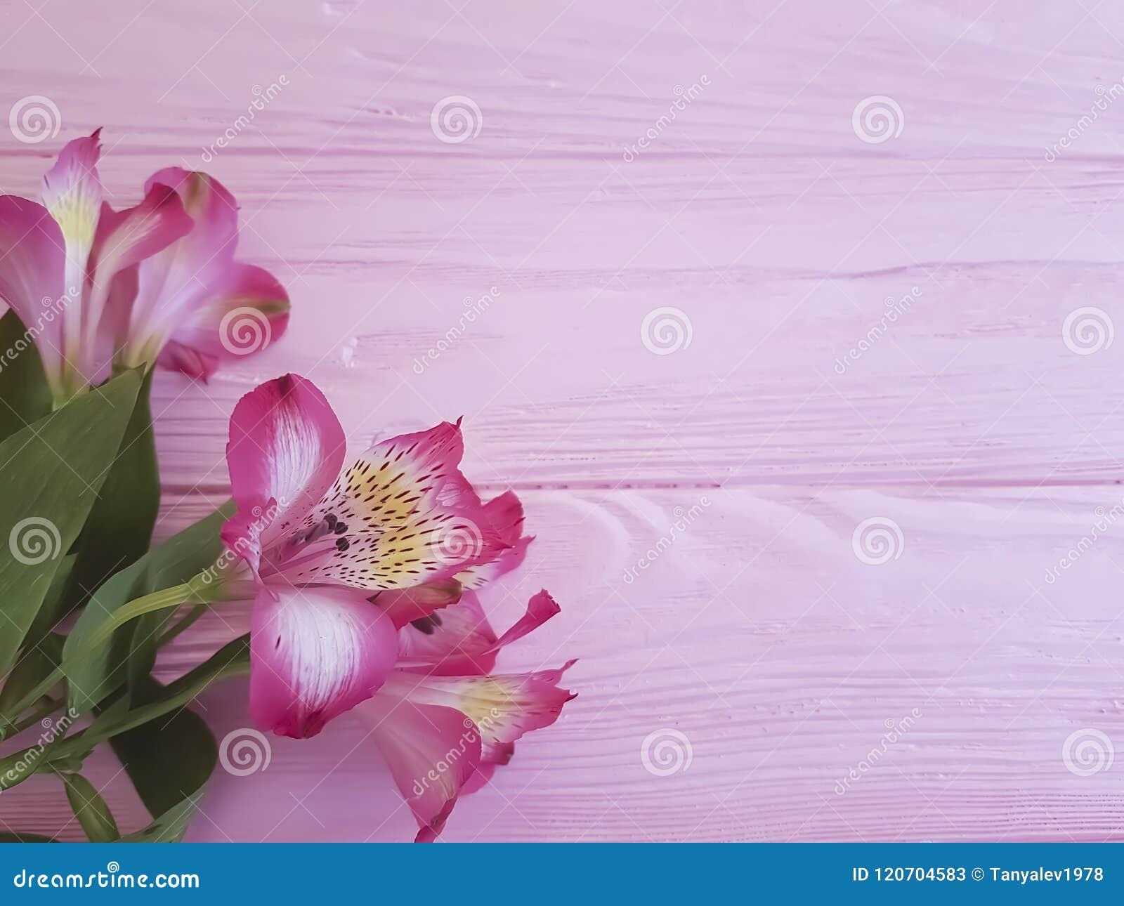 Saludos románticos imponentes del vintage del aniversario del Alstroemeria en un fondo rosado del marco de madera