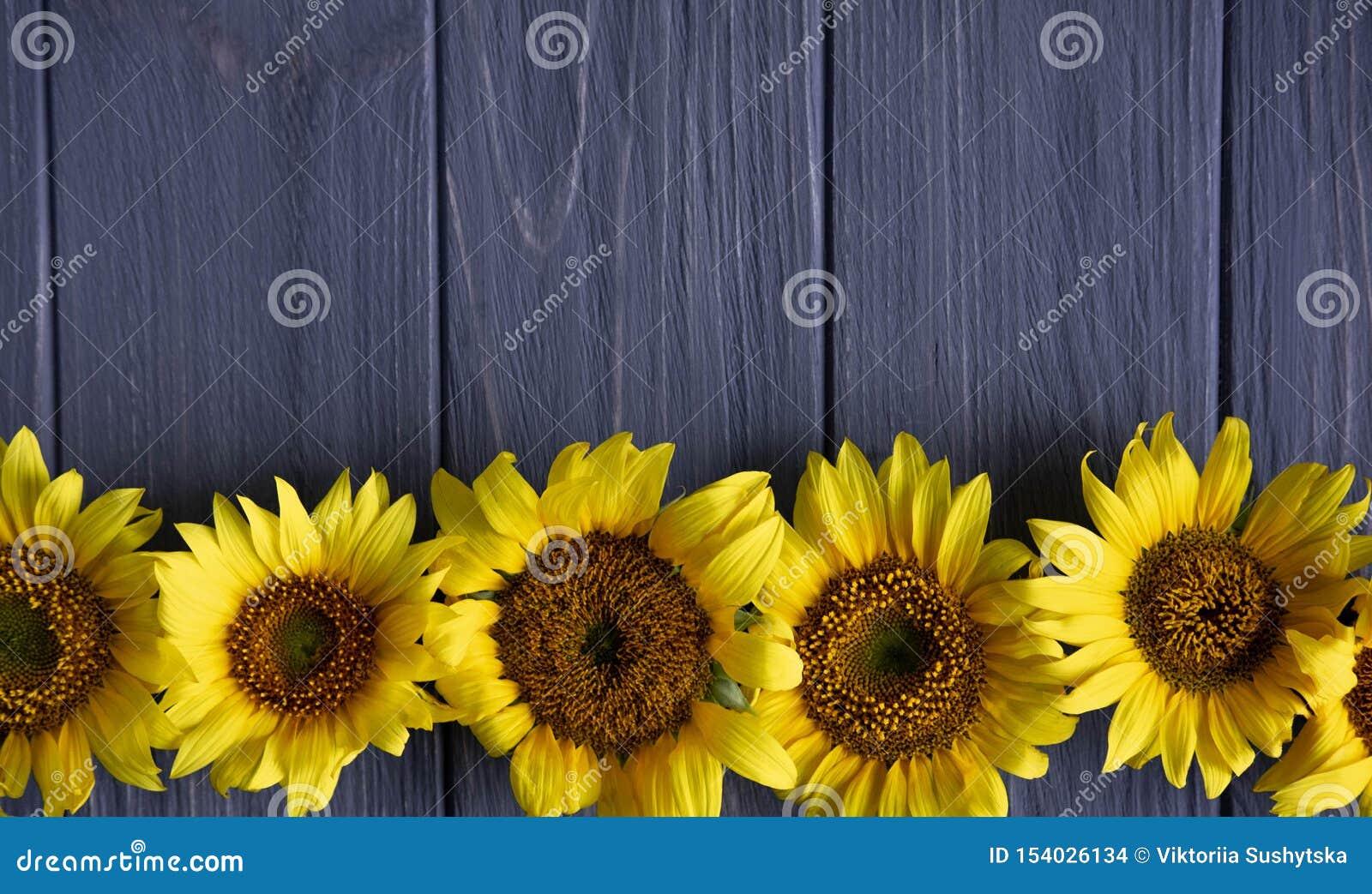 Salutation du design de carte avec des tournesols sur le fond en bois gris Vue pour le texte avec des fleurs de tournesol Tournes
