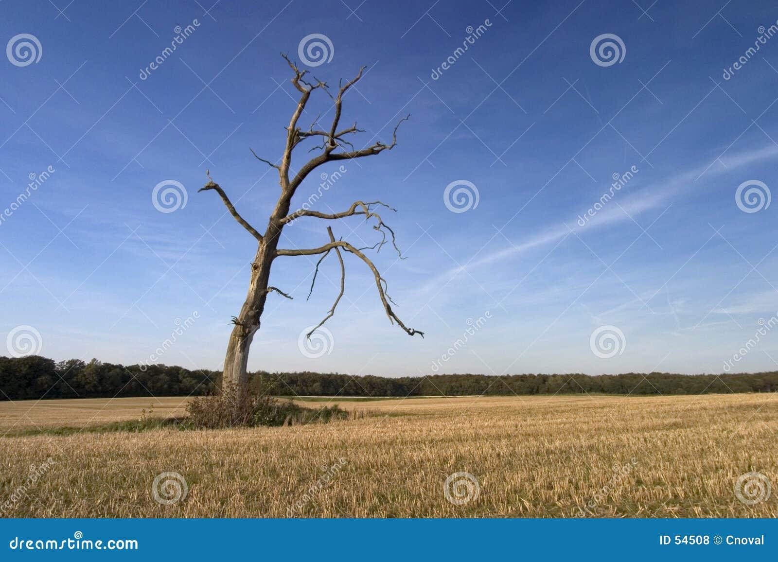 Sam drzewo