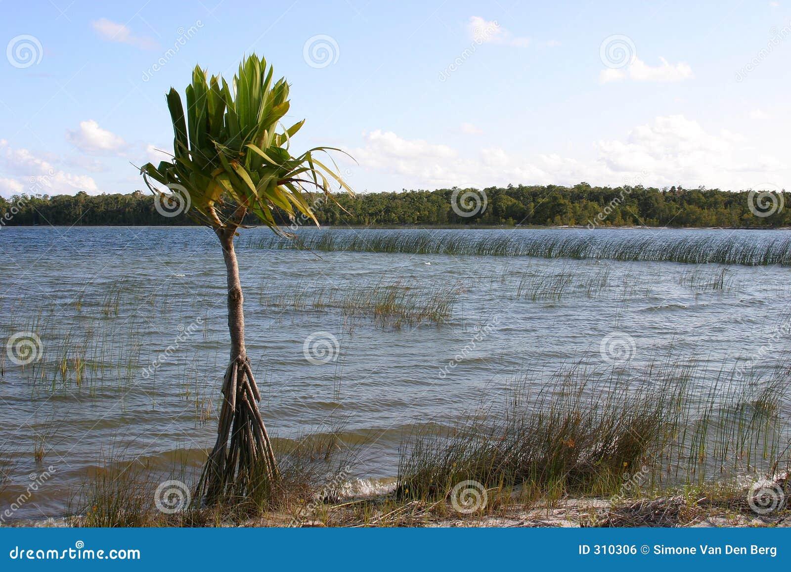 Sam palmtree