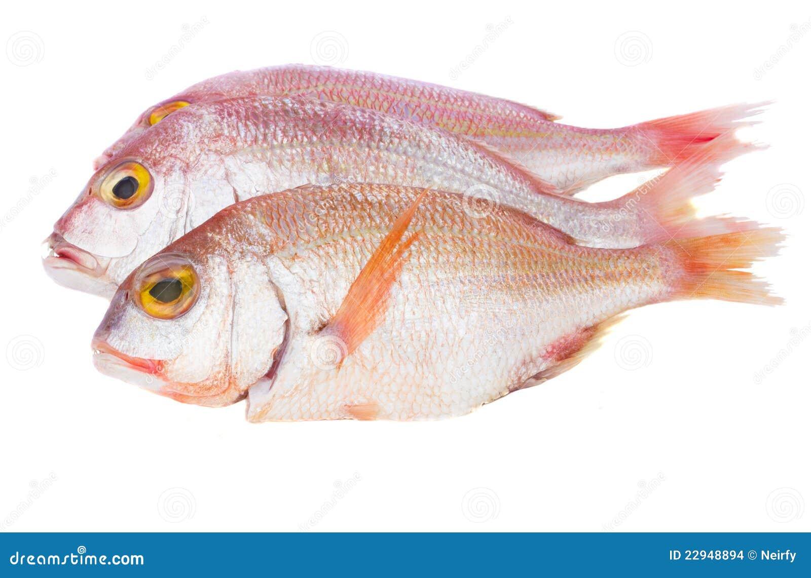 Sama-Fische stockfoto. Bild von pink, geschichten, barsch - 22948894