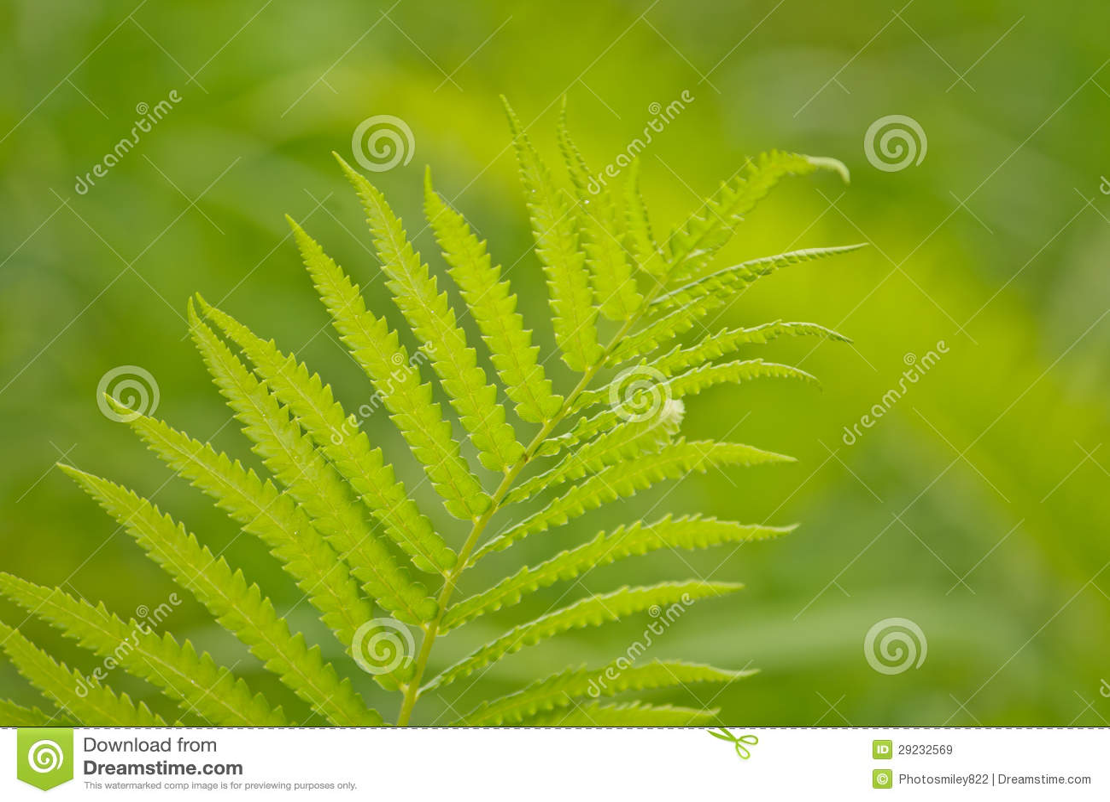 Download Samambaias de árvore imagem de stock. Imagem de jardim - 29232569