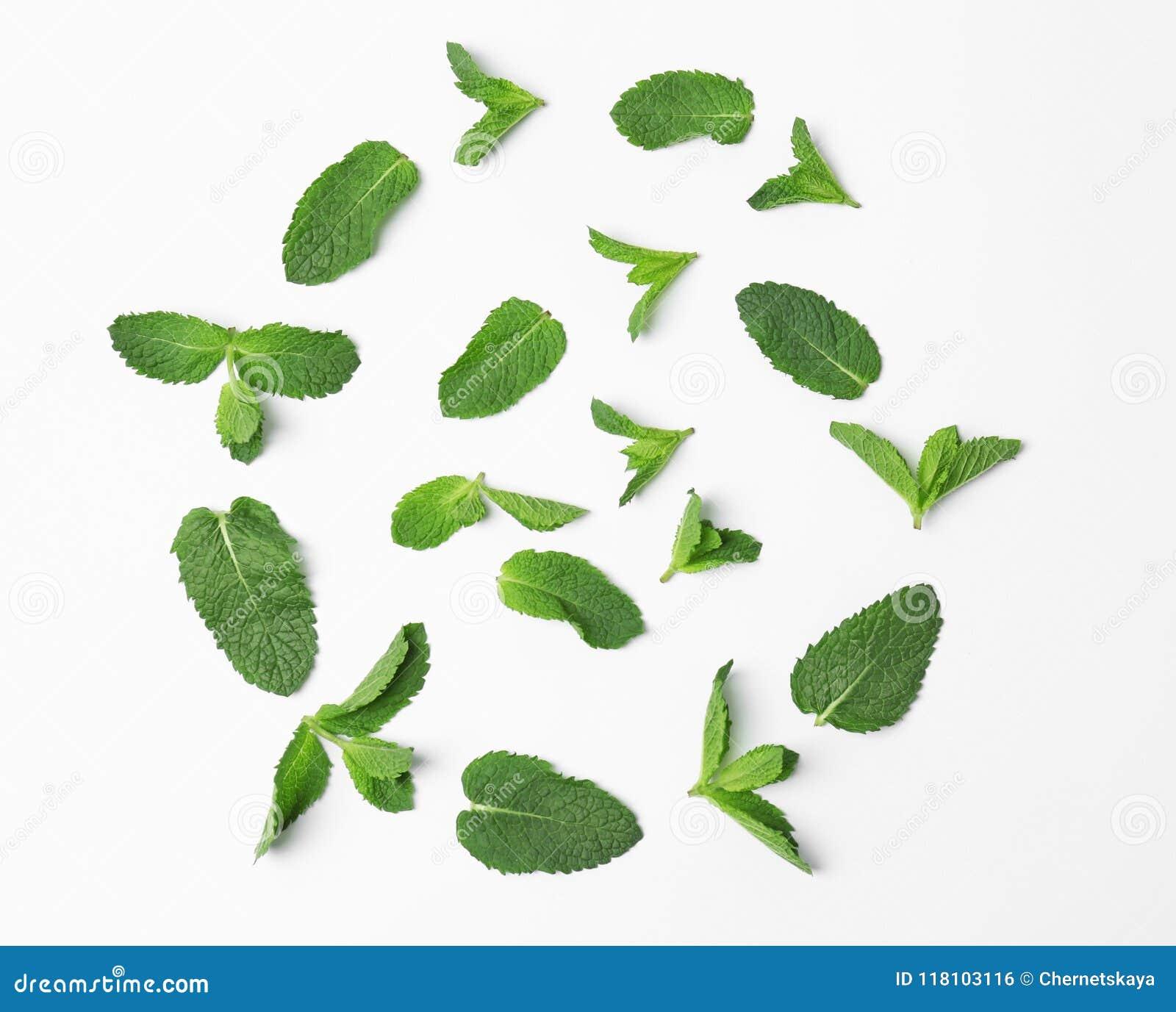 Samenstelling met verse groene muntbladeren op witte achtergrond, hoogste mening