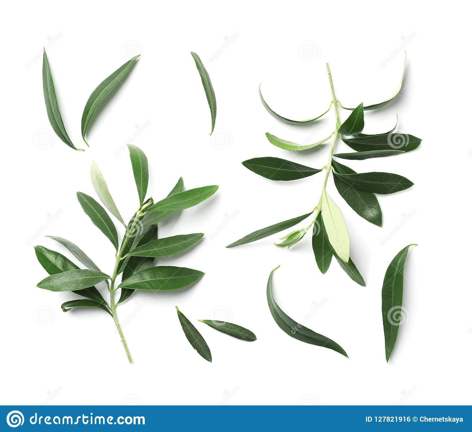 Samenstelling met verse groene olijfbladeren en takjes op witte achtergrond