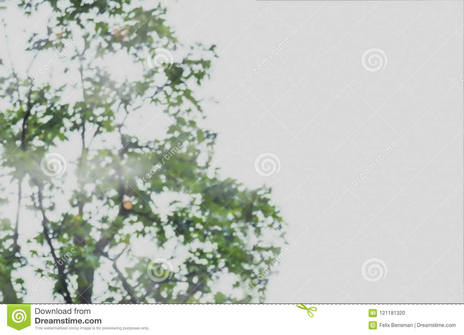 Samenvatting vaag beeld van boom groen gebladerte