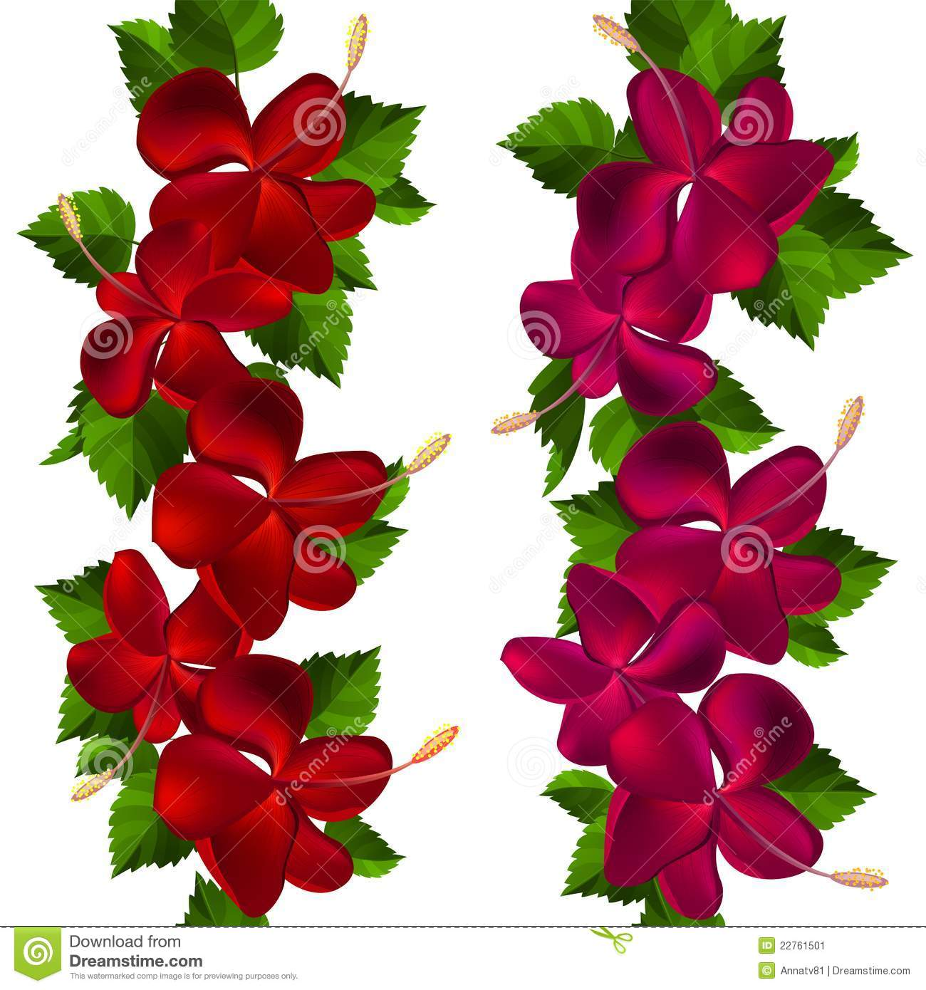hibiscus flowers and leaf border stock photography  image, Beautiful flower