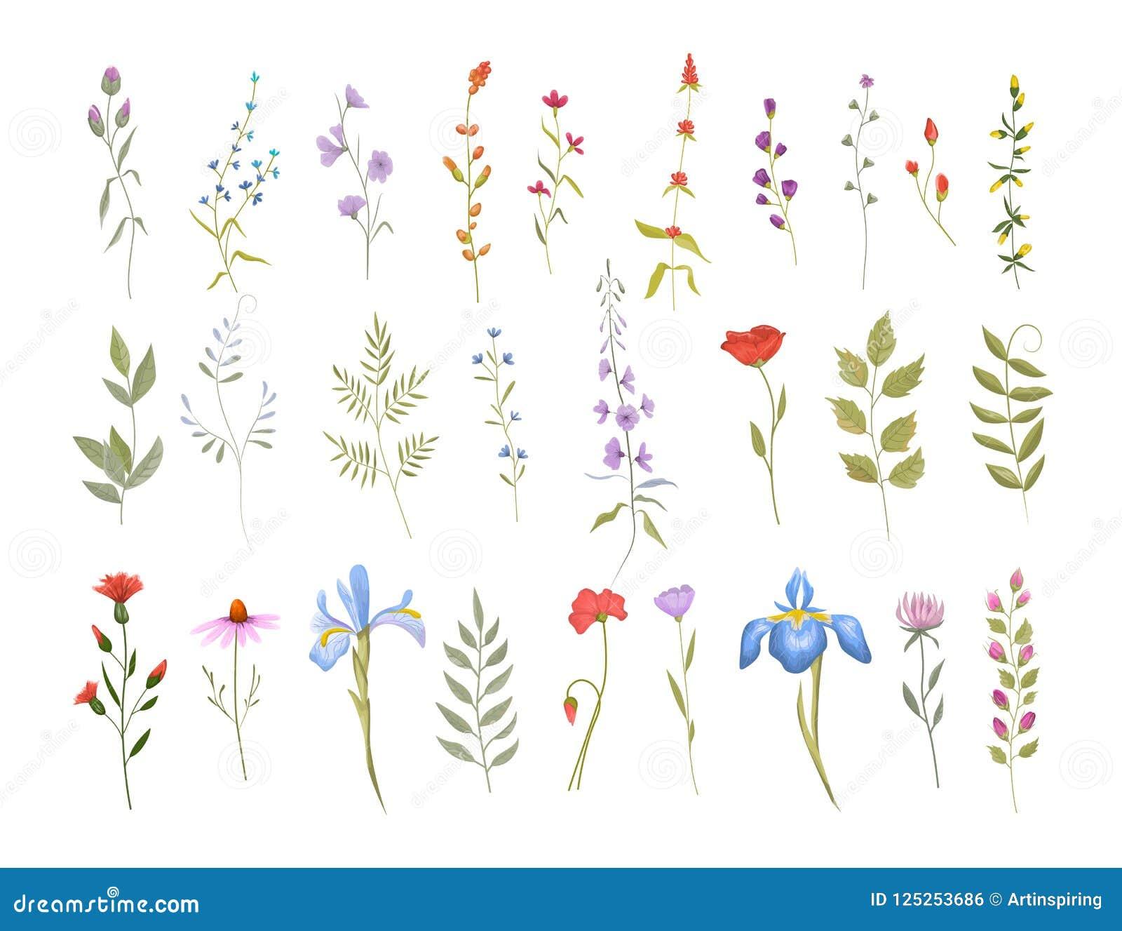 Samling av lösa blommor blom- set för element