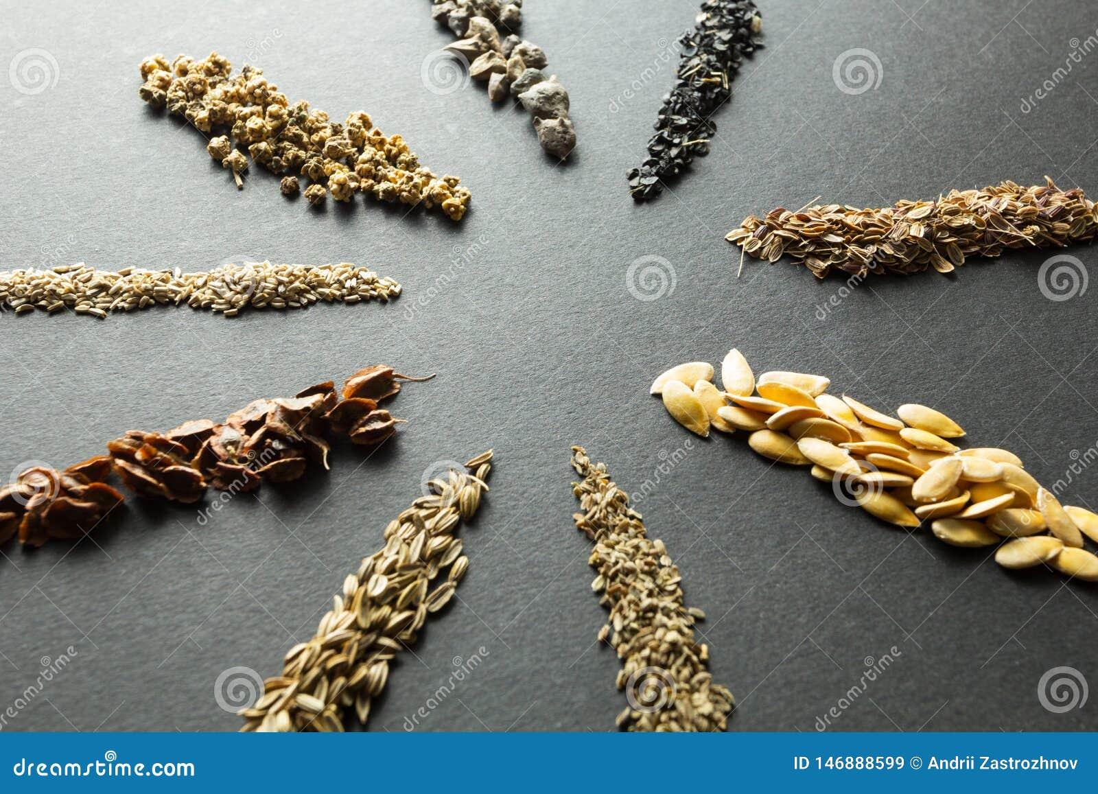Samling av organiskt frö för att plantera i jorden: rabarber sallad, beta, spenat, lök, dill, melon, morot, fänkål som isoleras