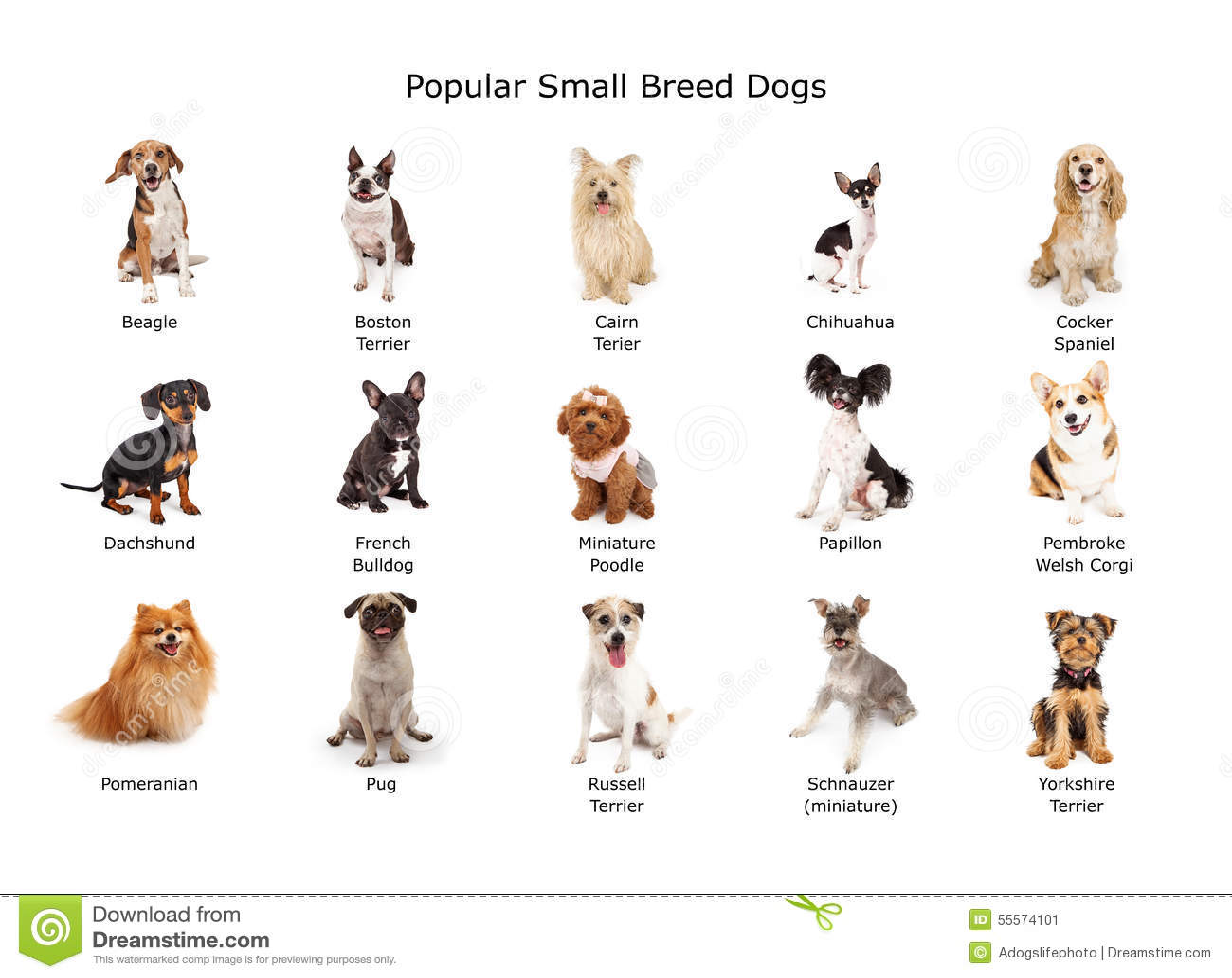 Samling av populär liten avelhundkapplöpning