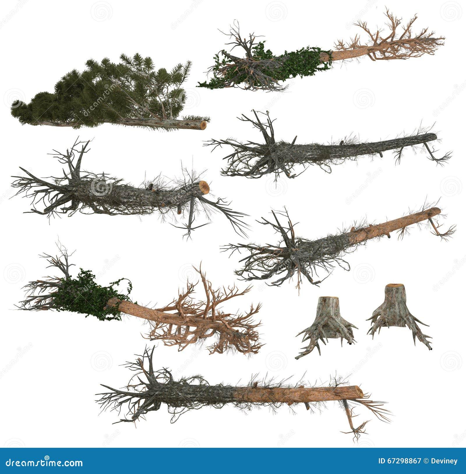 Samling av stupade träd och trädstubbar
