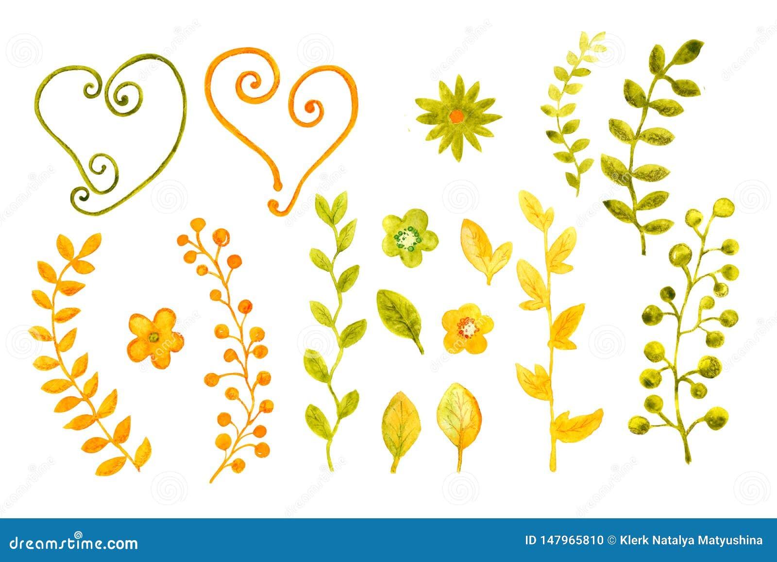 Samling av vattenfärger av blommor och sidor F?r r?kningsdesign och att f?rpacka, bakgrunder