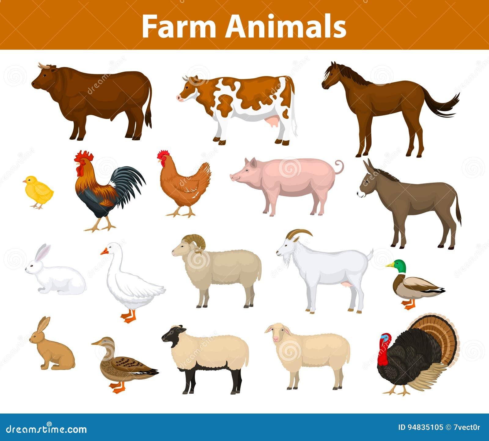 Samling för lantgårddjur