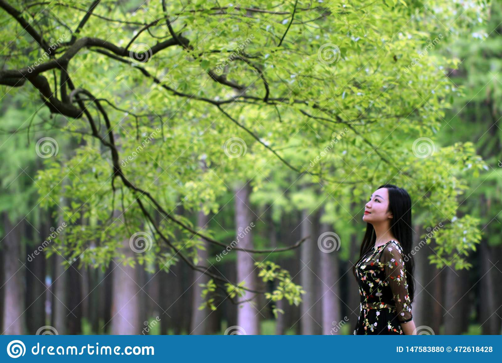 Samotna kobieta pod du?ym okwitni?cia drzewem
