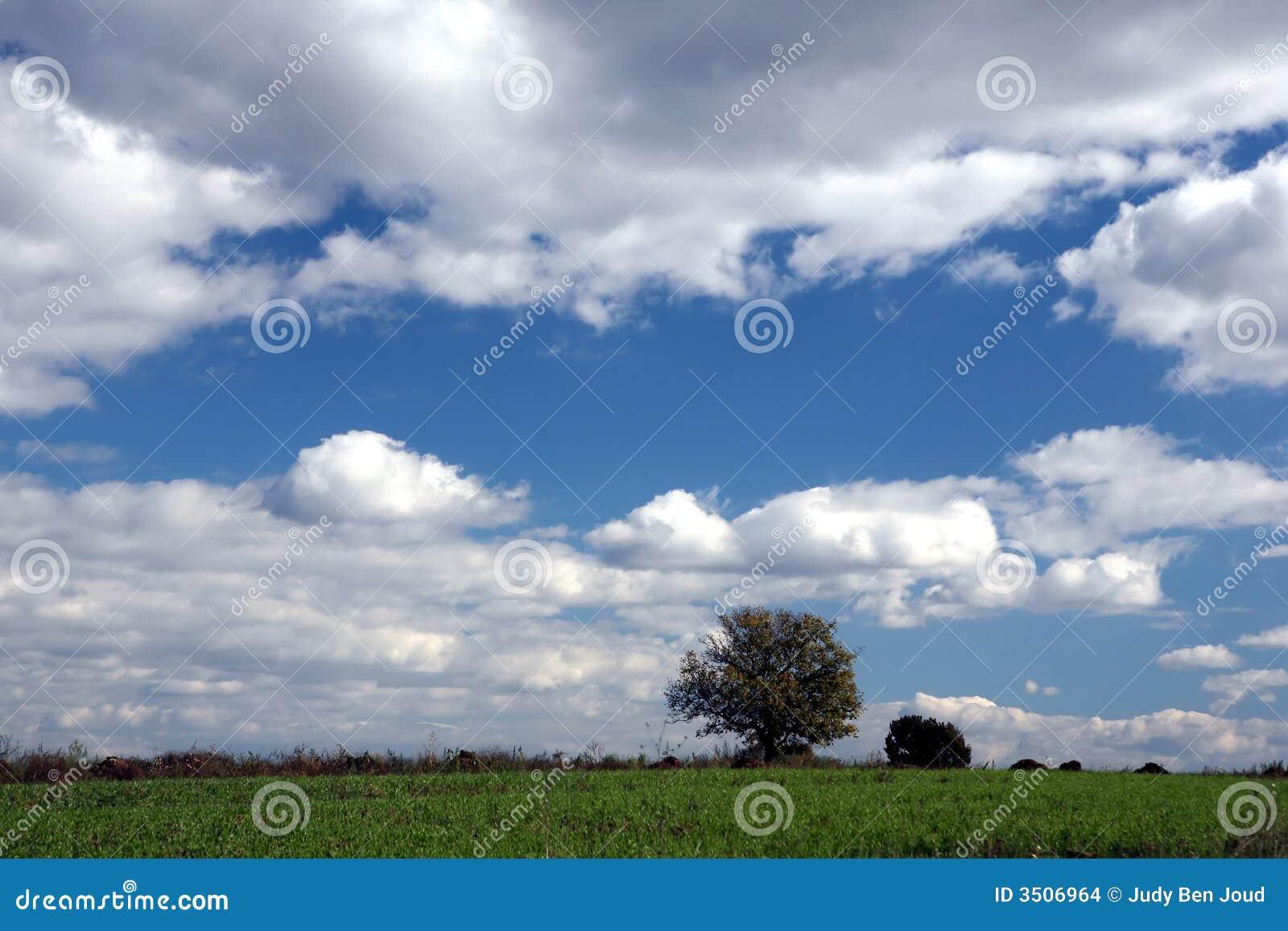 Samotne drzewo nieba szeroki