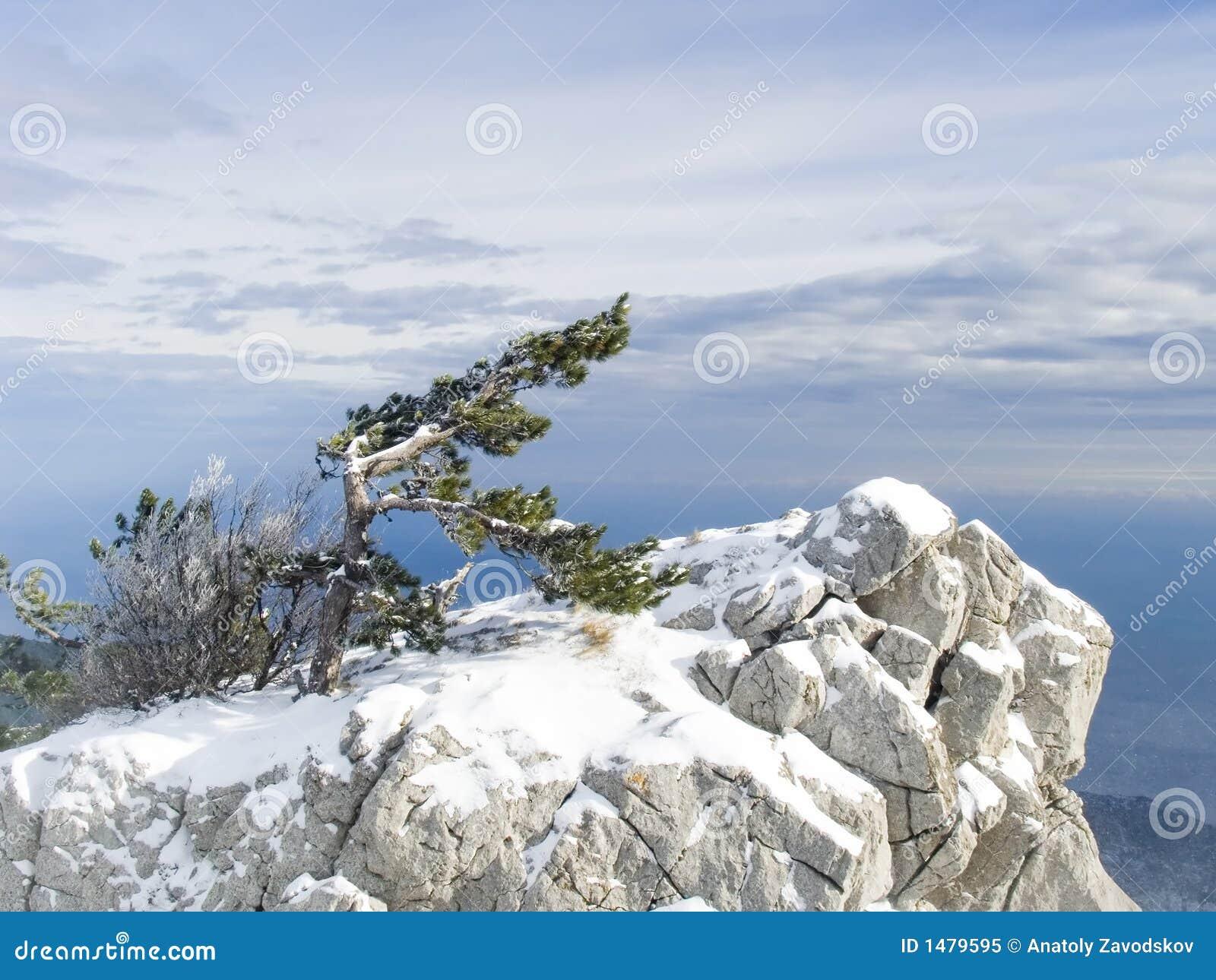 Samotne na krymie gór sosny rock
