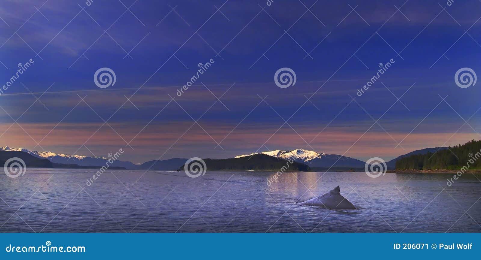 Samotność humpback