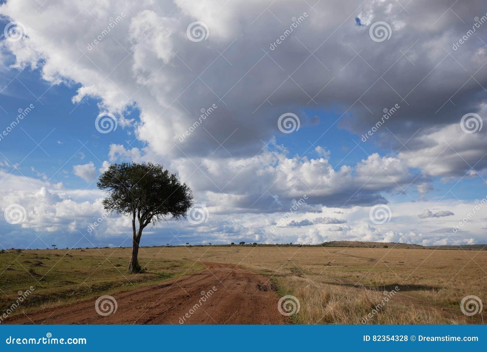 Samotny drzewo i chmurni nieba