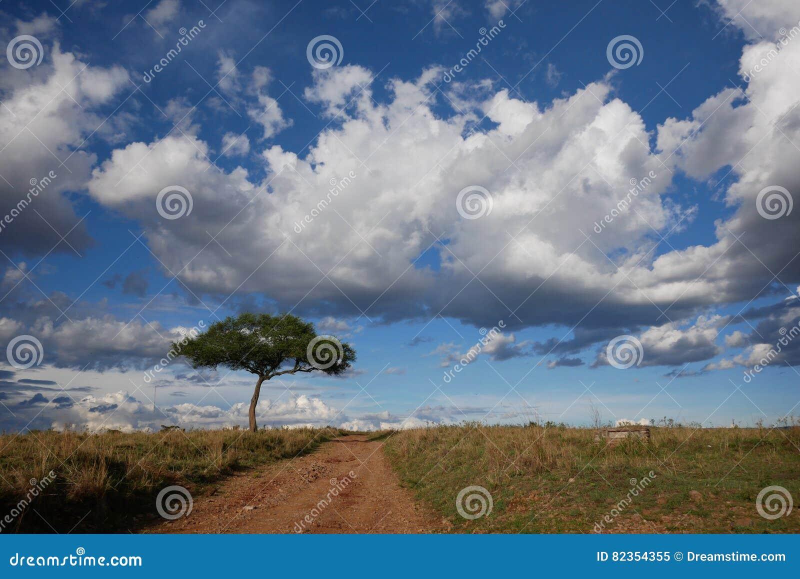 Samotny drzewo 2 i chmurni nieba