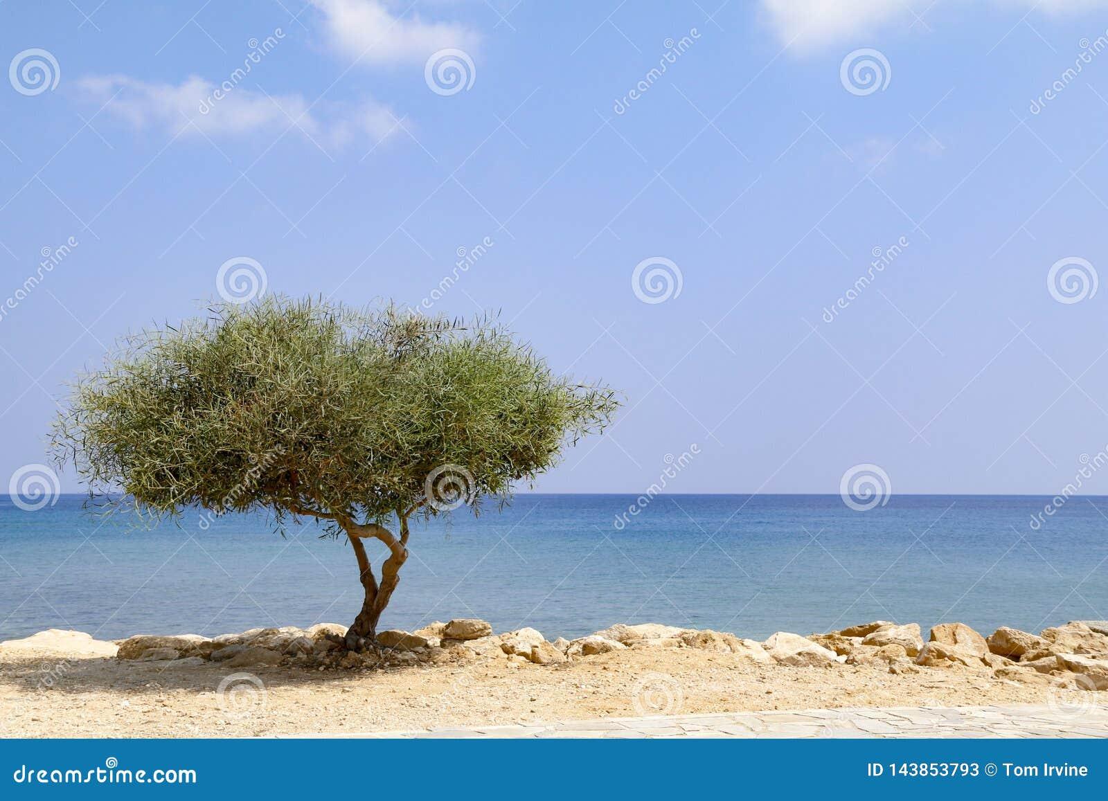 Samotny drzewo obok morza na słonecznym dniu z niebieskim niebem