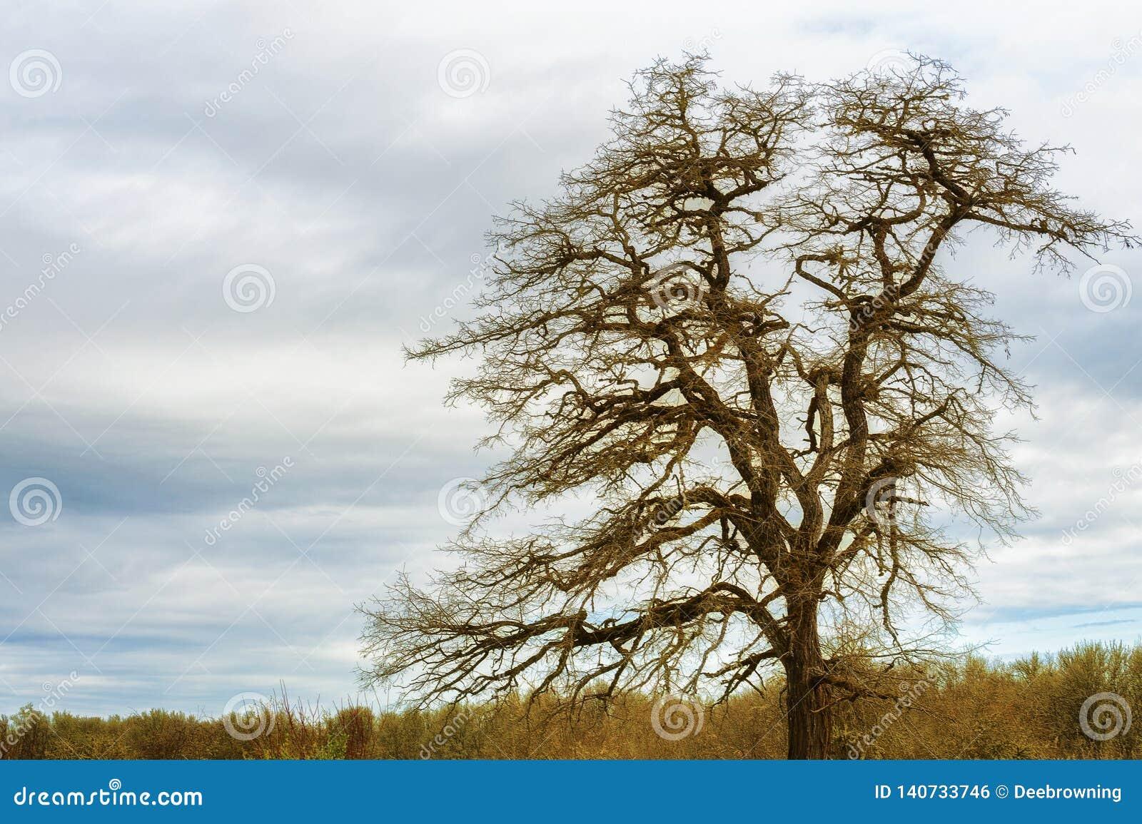 Samotny drzewo pod chmurnymi niebami